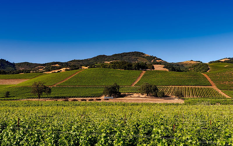 Views of Napa Valley vineyards