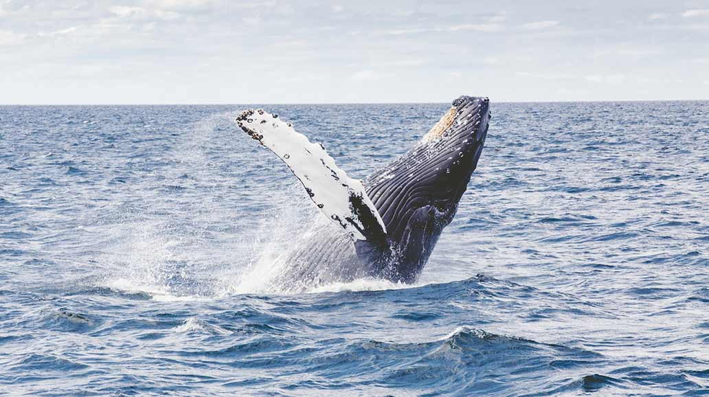 The Ultimate Guide to Whale Watching in Hermanus